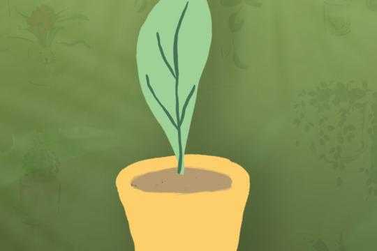 etiqueta planta